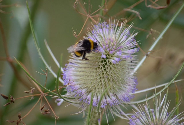 Health, Happiness and Hairy-footed Flower Bees